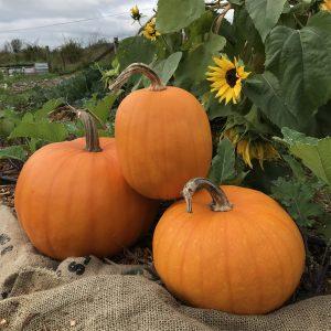 Fall on the Farm: October 2020
